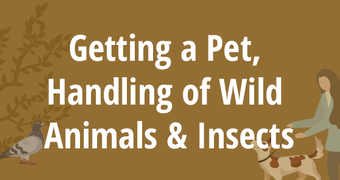 Getting a Pet, Handling of Wild Animals & Insects